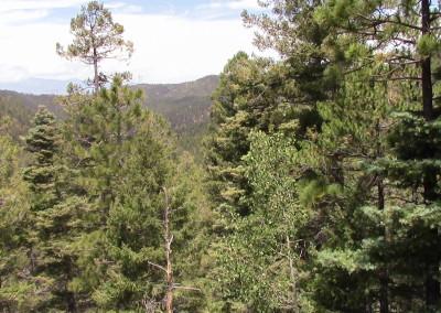 Trees of Santa Fe