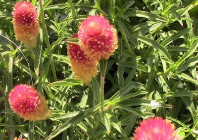 Fuzzy blossoms